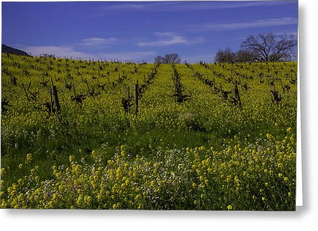 Springtime Vineyards Sonoma Greeting Card by Garry Gay