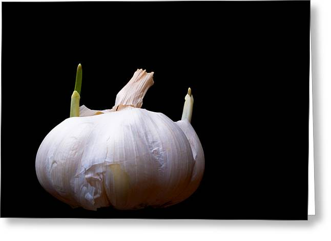 Sprouting Garlic Greeting Card by Jim DeLillo