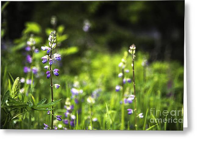 Scenic Greeting Cards - Sprouting Purple Greeting Card by Jon Olmstead