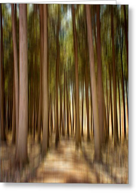 Paint Effect Greeting Cards - Spruce Forest Blur Greeting Card by Jackie Novak