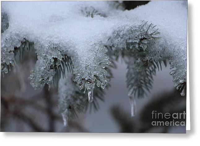 Wintry Greeting Cards - Spruce Icicles Greeting Card by Jari Hawk