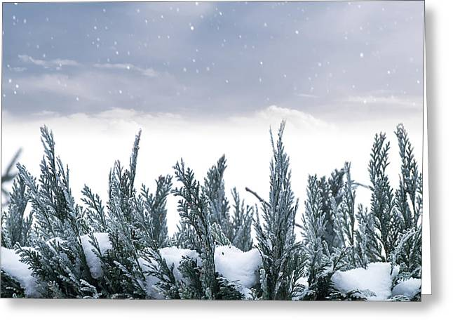 Spruce In Snow Greeting Card by Wim Lanclus