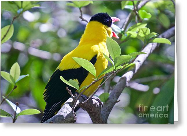 Wild Birds Greeting Cards - Squawk Greeting Card by Judy Kay