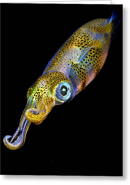 Underwater Photos Photographs Greeting Cards - Squid at night Greeting Card by Rico Besserdich