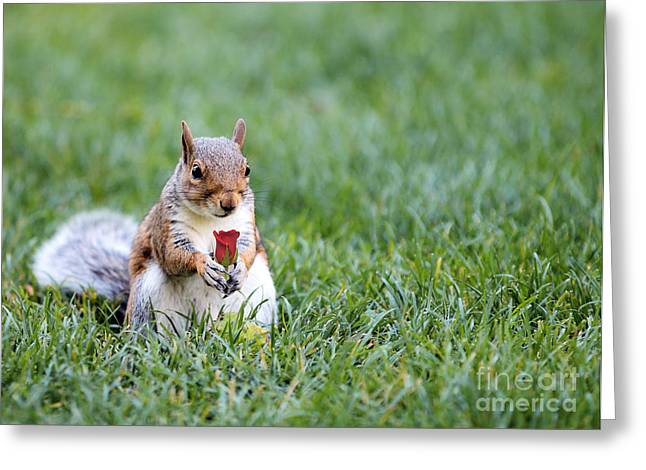 Wildlife Celebration Greeting Cards - Squirrel and Rose Greeting Card by Paul Fell