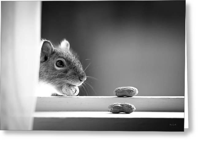 Squirrel And Three Peanuts Greeting Card by Bob Orsillo