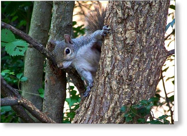 Tree Squirrel Greeting Cards - Squirrel I Greeting Card by Jai Johnson
