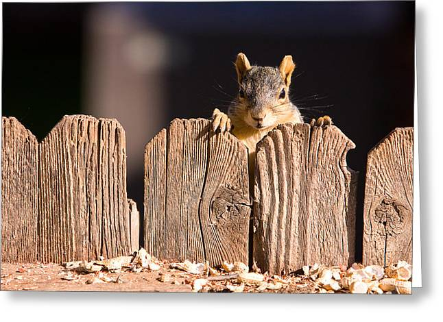 Squirrel On The Fence Greeting Card by James BO  Insogna