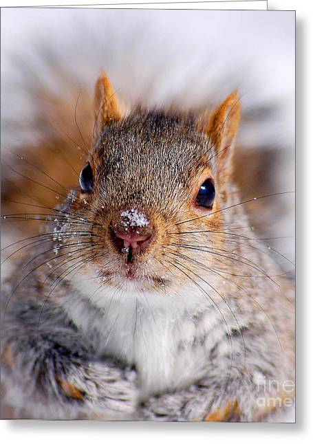 Sciurus Carolinensis Greeting Cards - Squirrel portrait Greeting Card by Mircea Costina Photography