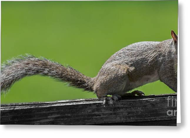 Vegetables Tapestries - Textiles Greeting Cards - Squirrel Run Greeting Card by James Hennis