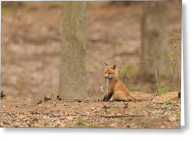 Red Fox Pup Greeting Cards - Squirrel Watch Greeting Card by Everet Regal