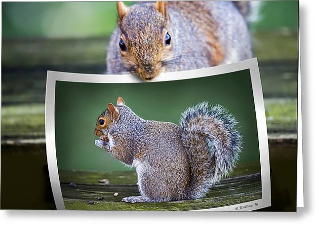 Squirrely Critique Greeting Card by Brian Wallace