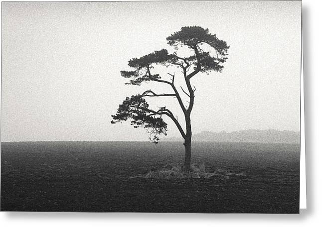 St Cyrus Tree Greeting Card by Dave Bowman