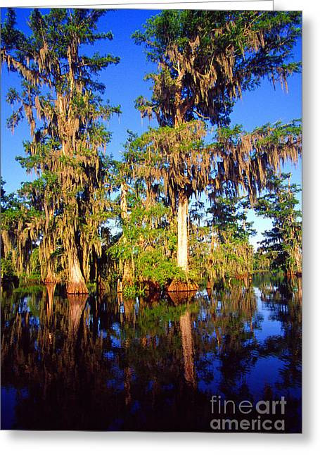 Acadian Greeting Cards - St Martin Parish Lake Martin Greeting Card by Thomas R Fletcher