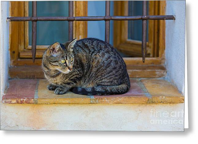 Vence Greeting Cards - St Paul Cat Greeting Card by Inge Johnsson