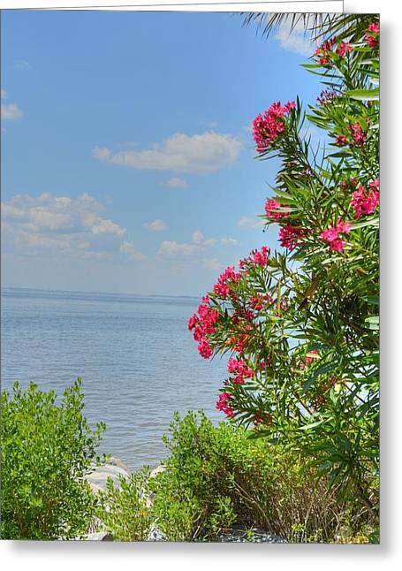Blue Green Water Greeting Cards - St. Simon shoreline Greeting Card by Linda Covino