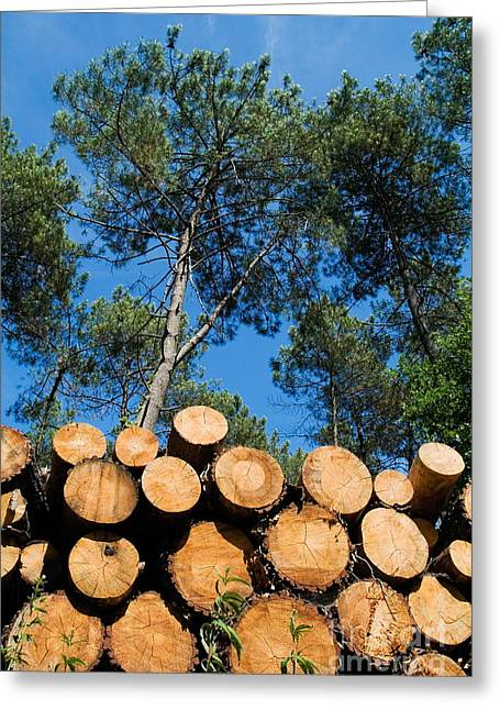 Problem Greeting Cards - Stack of logs piled together in Landes Forest Greeting Card by Sami Sarkis