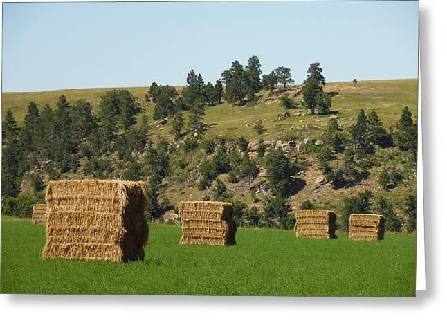 Hay Bales Greeting Cards - Stacks of Hay Greeting Card by Pamela Pursel