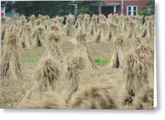 Amish Photographs Photographs Greeting Cards - Stacks Greeting Card by Renee Holder
