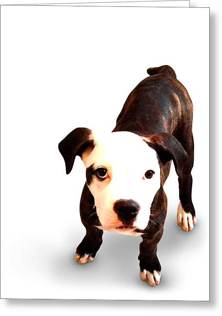 Staffordshire Bull Terrier Puppy Greeting Card by Michael Tompsett