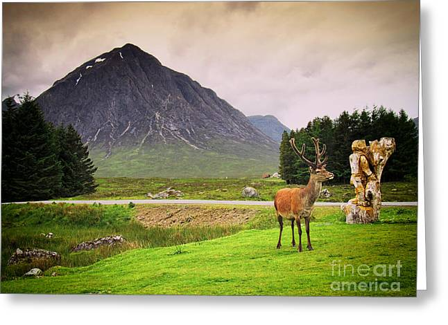 Rudolph Greeting Cards - Stag in the Glen Greeting Card by JM Braat Photography