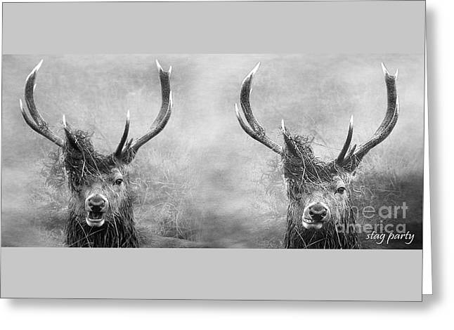Nature Greeting Cards - Stag Party And The Morning After In Black And White Greeting Card by Linsey Williams