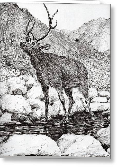Mountain Valley Drawings Greeting Cards - Stag Greeting Card by Vincent Alexander Booth