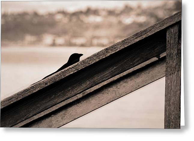 Wooden Stairs Greeting Cards - Stair Crow Greeting Card by David Coleman