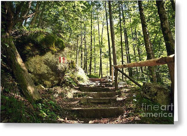 Wooden Stairs Greeting Cards - Stairs in Forest Greeting Card by Sick Michael