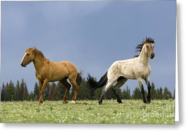 Male Dominated Greeting Cards - Stallion Altercation Greeting Card by Jean-Louis Klein & Marie-Luce Hubert