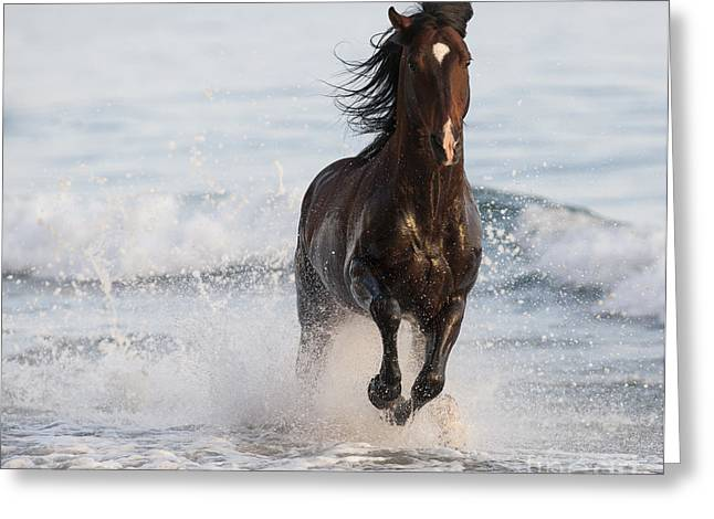 Brown Horse Photographs Greeting Cards - Stallion Leaps in the Surf Greeting Card by Carol Walker