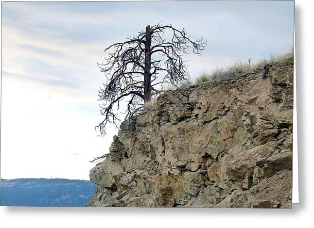 Strong Will Greeting Cards - Stalwart Pine Tree Greeting Card by Will Borden