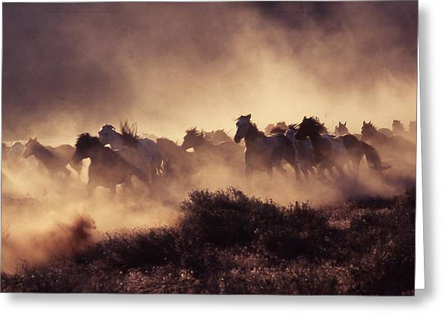 Amimal Greeting Cards - Stampede Greeting Card by Francine Gourguechon