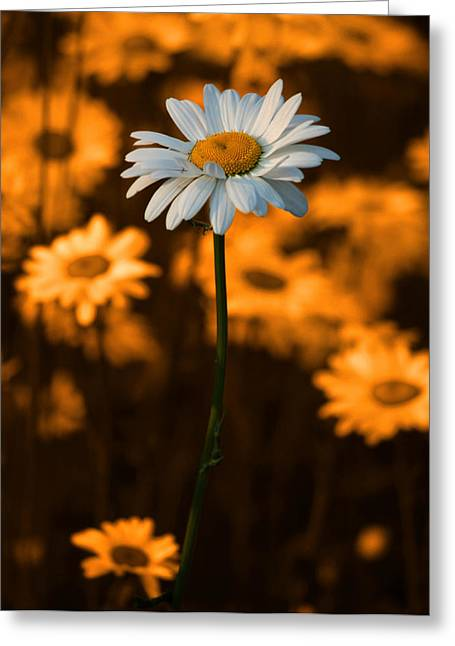 White Florals Greeting Cards - Standing Alone Greeting Card by Linda McRae