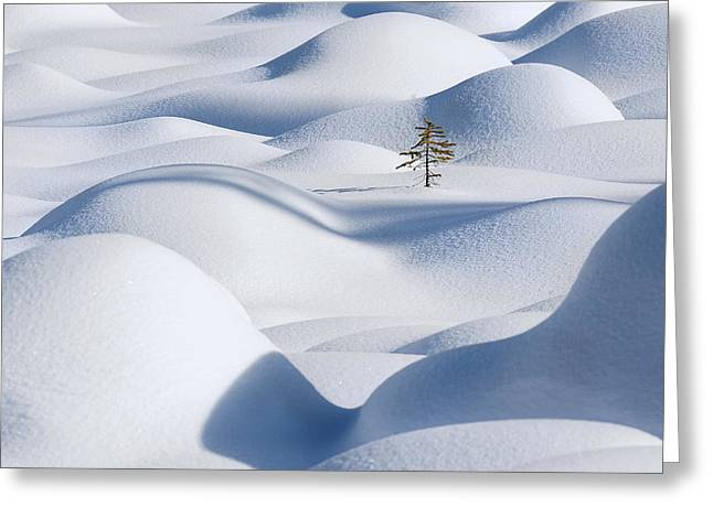Fir Greeting Cards - Standing In The Waves Greeting Card by Victor Liu