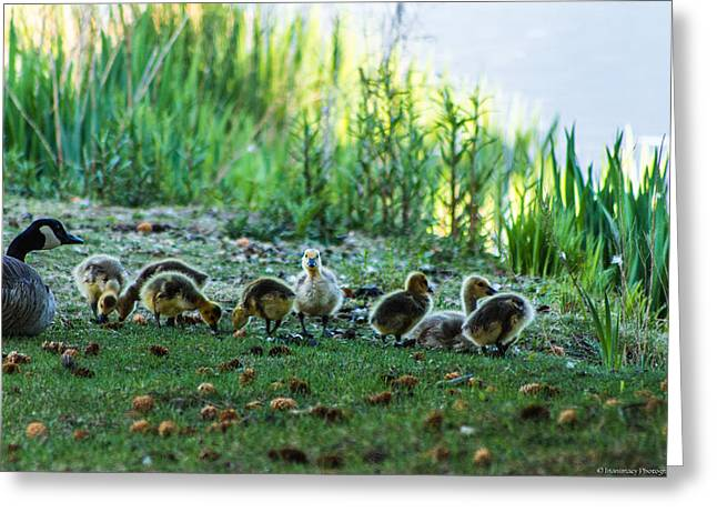 Mother Goose Greeting Cards - Standing Out Greeting Card by Christopher Peterson