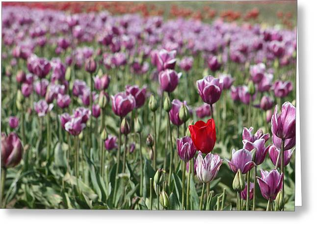 Standing Out In A Crowd Greeting Card by Nick Gustafson
