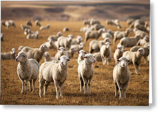 Standing Out In The Herd Greeting Card by Todd Klassy
