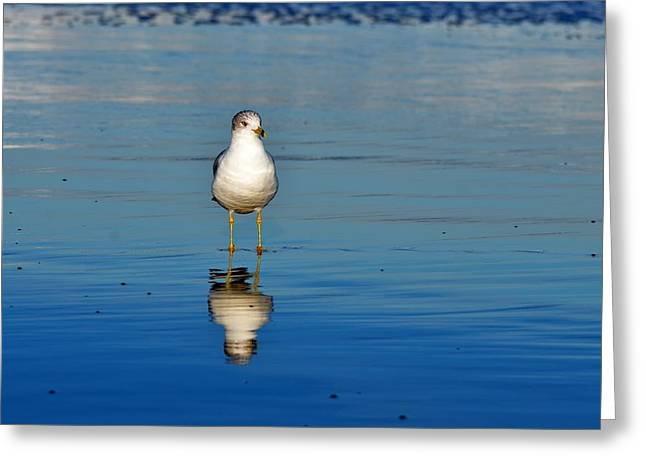 Flying Seagull Greeting Cards - Standing Greeting Card by Russell Bonovitch