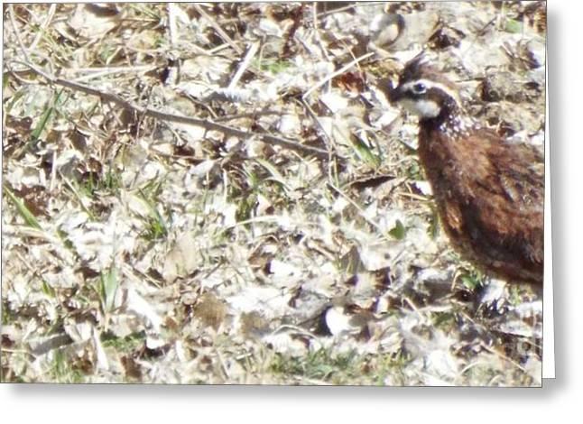 Hunting Bird Greeting Cards - Standing Still Greeting Card by Caryl J Bohn