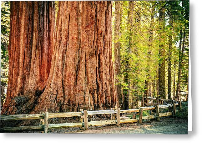 Sequoia National Park Greeting Cards - Standing Tall Greeting Card by Aron Kearney Fine Art Photography