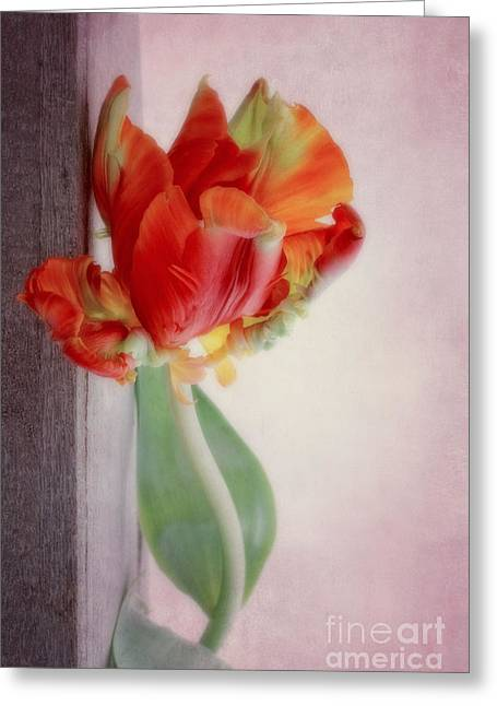 Flower Design Greeting Cards - Standing tulip Greeting Card by SK Pfphotography