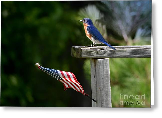 Arkansas Greeting Cards - Standing Watch Greeting Card by Nava  Thompson