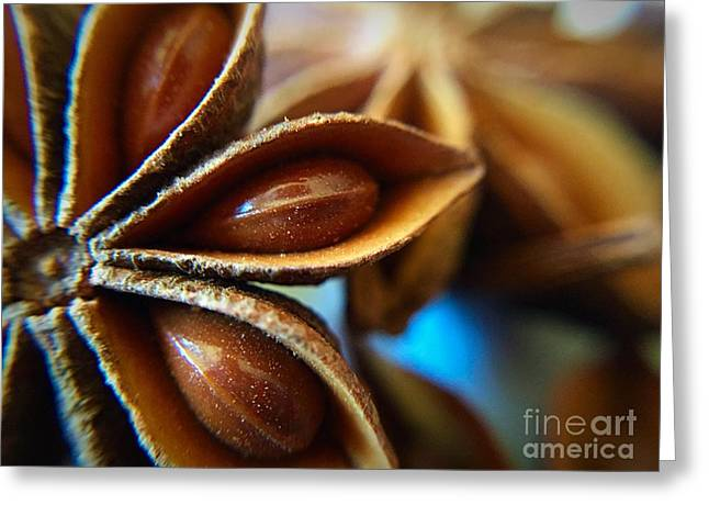 Menu Greeting Cards - Star Anise Greeting Card by Bri Lou