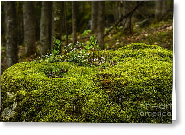 Star Greeting Cards - Star Chickweed Mossy Rock Greeting Card by Thomas R Fletcher