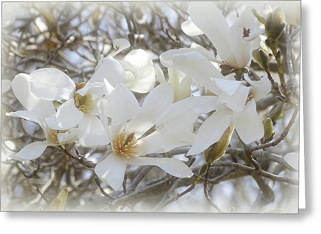 Indiana Trees Greeting Cards - Star Magnolia Blossoms Greeting Card by Sandy Keeton