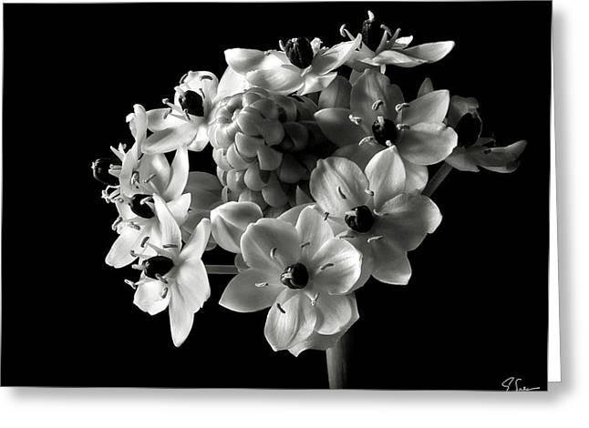 Star Of Bethlehem In Black And White Greeting Card by Endre Balogh