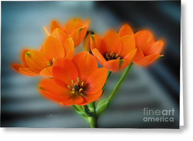 Star Of Bethlehem Greeting Cards - Star of Bethlehem Greeting Card by Jutta Maria Pusl