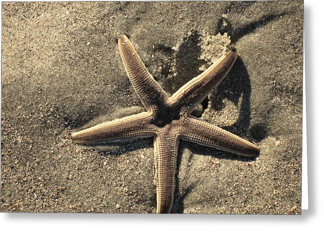 Star Of The Sea Greeting Card by Susanne Van Hulst