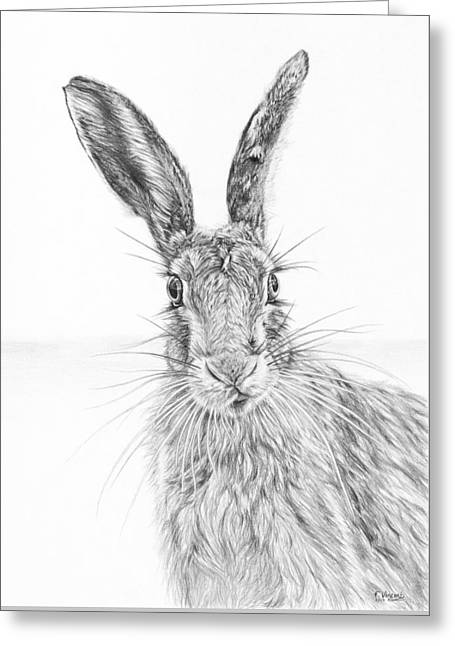 Stare Of The Hare Greeting Card by Frances Vincent